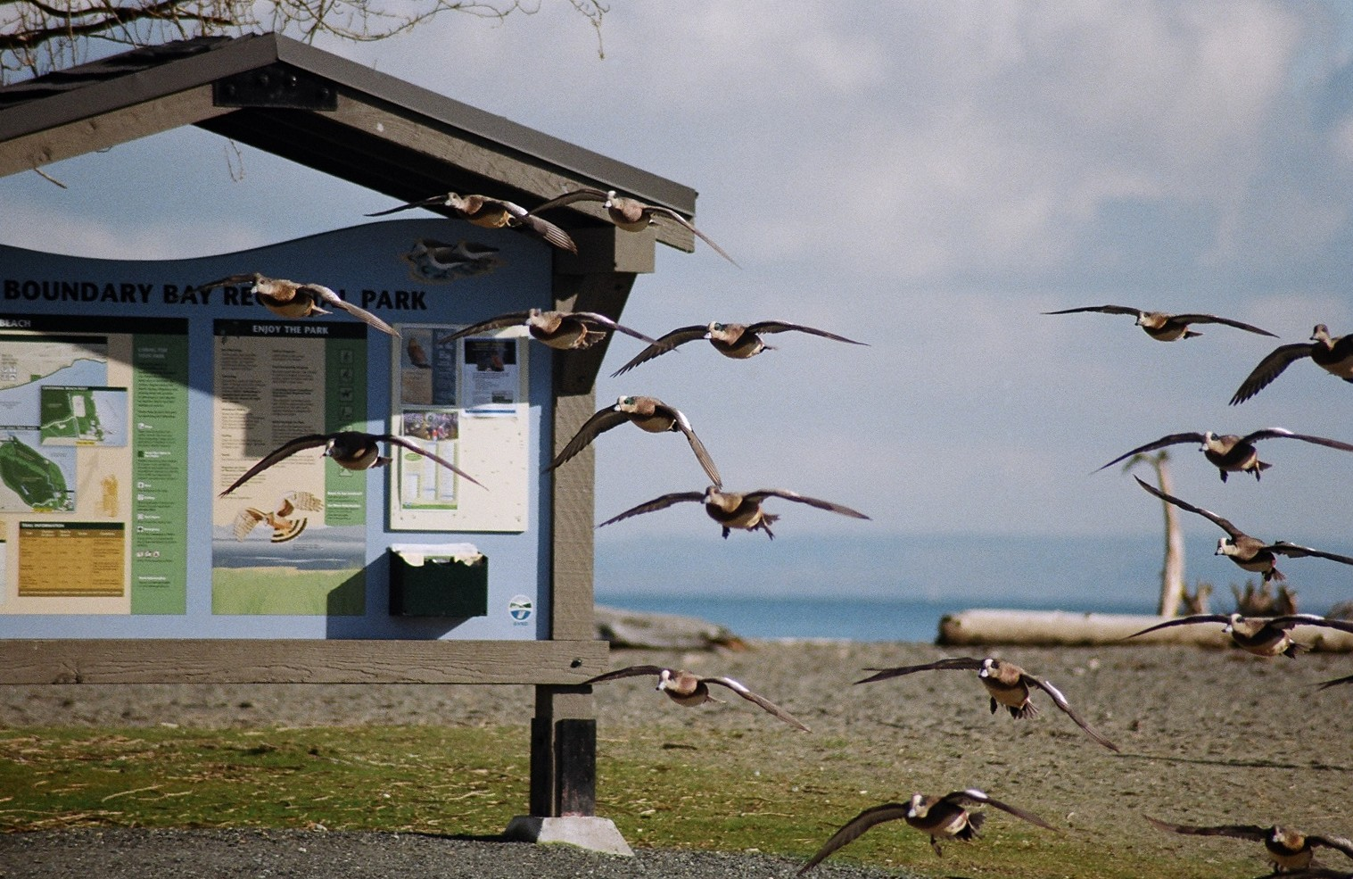 Birds at Centennial Beach - photo by Lois Richardson